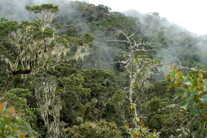 Arfak Mountain Papua