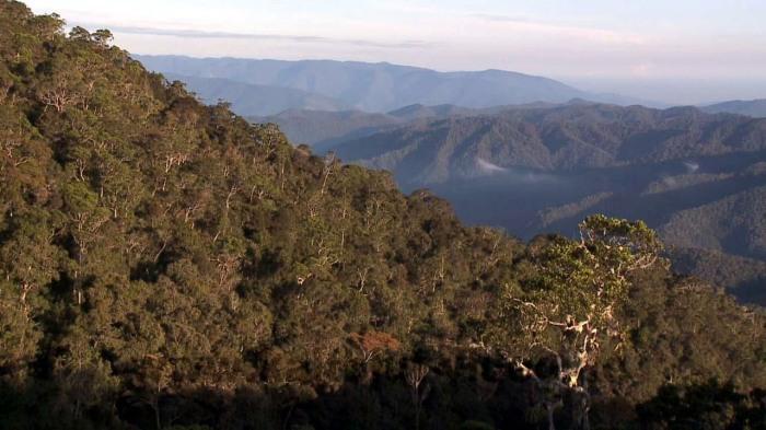 maxresdefault Arfak Mountain
