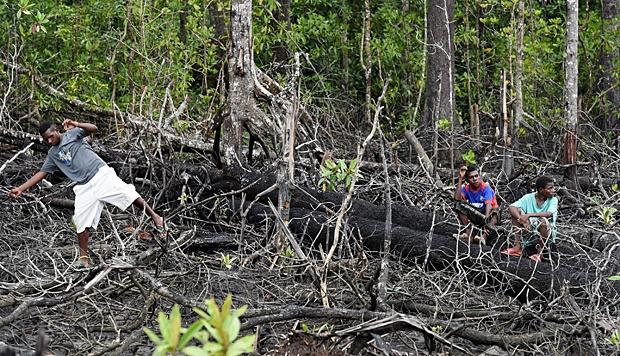 papua-mangrove